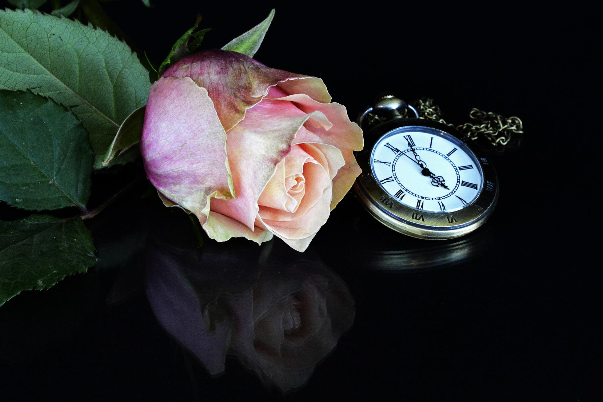 часы с цветами фото отличиям относятся